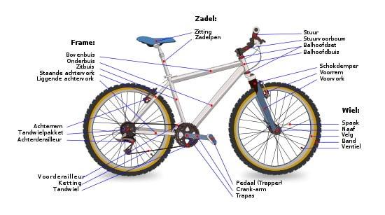Ziemlich Anatomie Eines Mountainbike Ideen - Anatomie Von ...