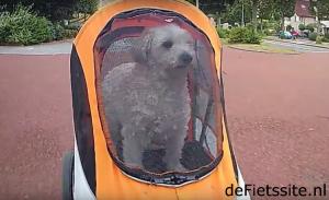 honden houden van fietsen