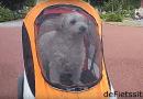 Ook honden houden van fietsen.